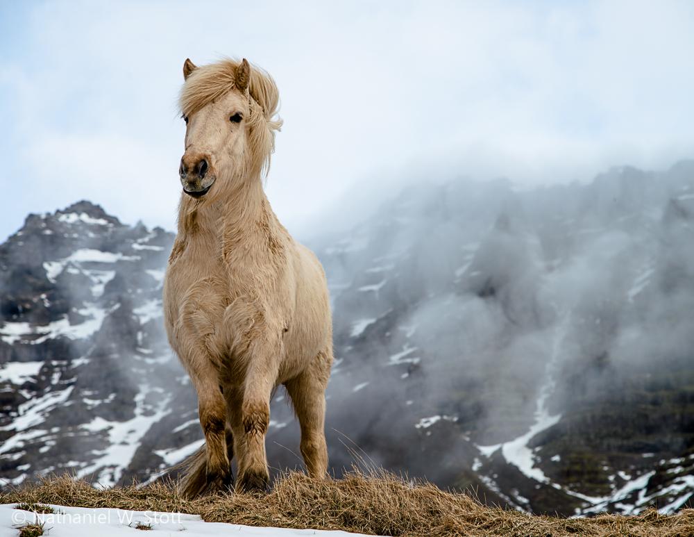 Iceland - Horse Pose