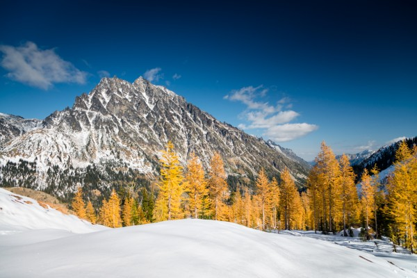 Larches-5